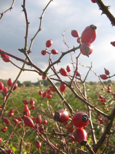 Herbst-Bilder